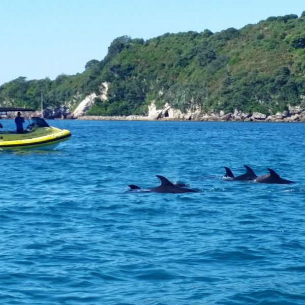 Ocean Leopard Tours Cathedral Cove Scenic Boat Trips